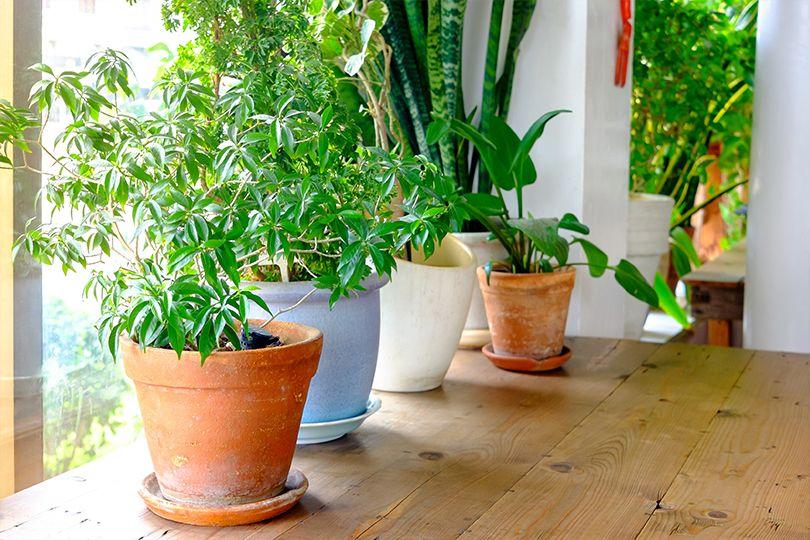 Tips on repotting houseplants.