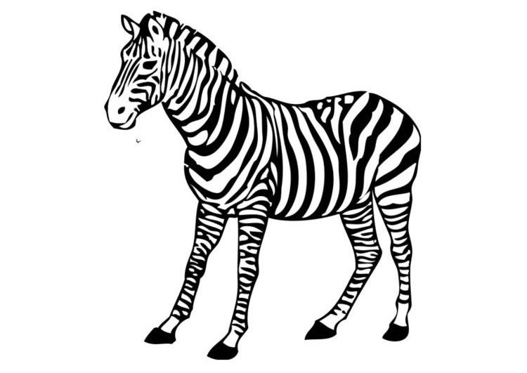 Free Printable Zebra Coloring Pages For Kids Zebras Pinterest