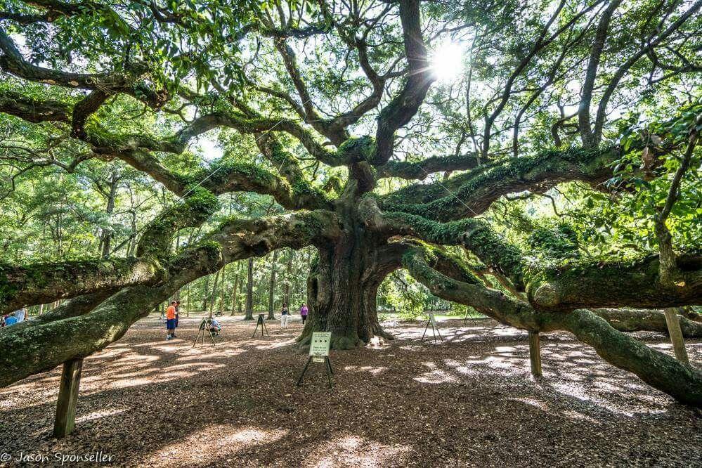 Angel Oak  Angel Oak Park, Johns Island, South Carolina. Magnificent and breathtakeningly beautiful.