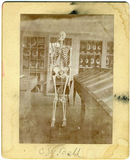 C.W. Bell, I do love the skeleton!
