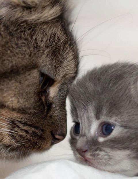 Cute Cat Mum And Her Kitty Kitten Baby Quelle Www Facebook