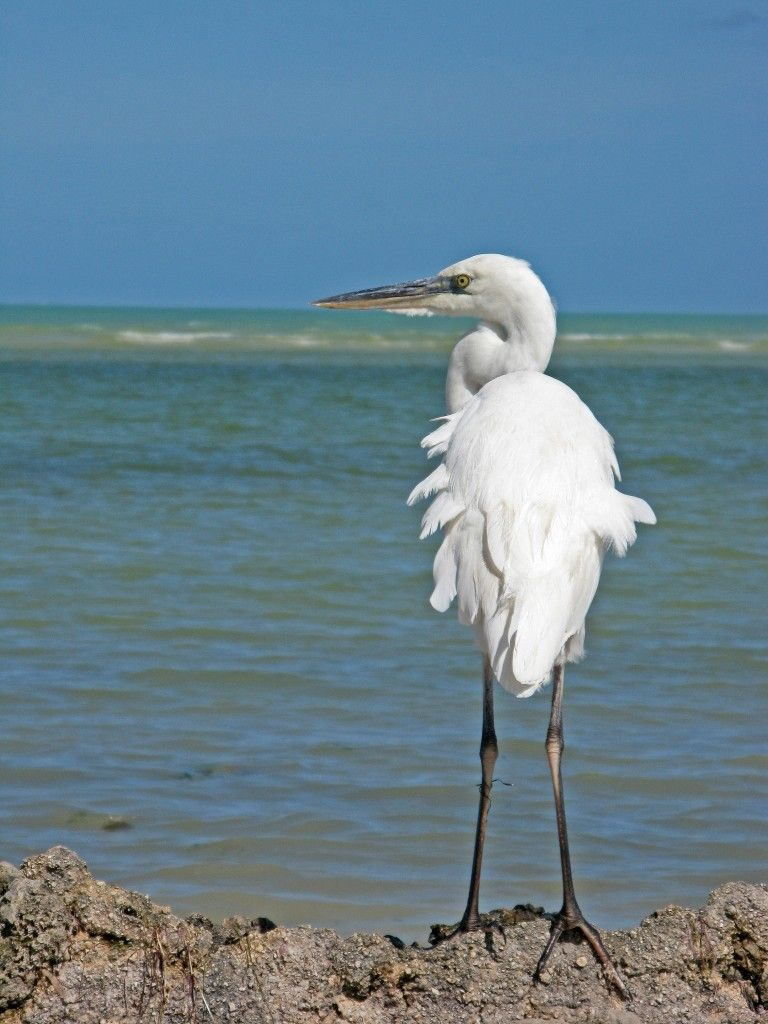 For those who love bird watching, Isla Holbox and its even smaller neighboring island, Isla Pajaros, are home to a variety of sea birds and flamingos.