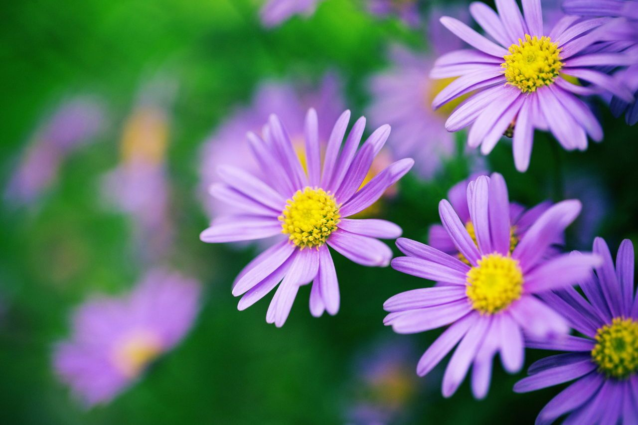 Symbolic Meanings Of Flowers That You Ve Been Wanting To Know In 2020 With Images Flower Meanings Purple Wedding Bouquets Purple Daisy