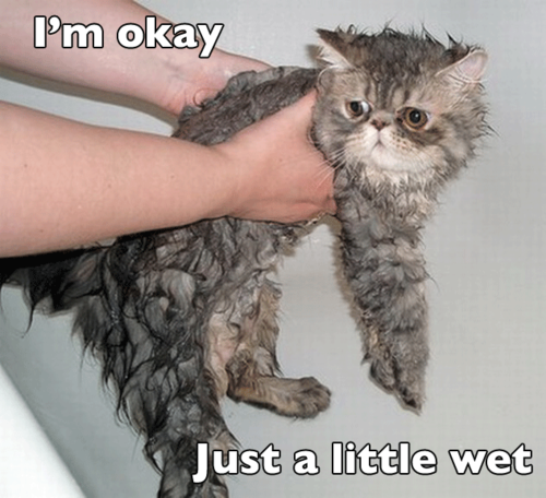 sad wet cat is sad, wet