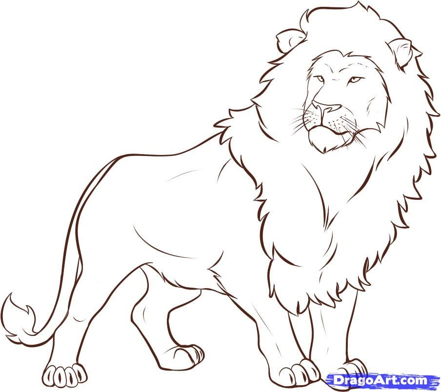 How To Draw A Lion Step By Step Safari Animals Animals Free Online Drawing Tutorial Added By Dawn September Lion Drawing Lion Drawing Simple Lion Sketch
