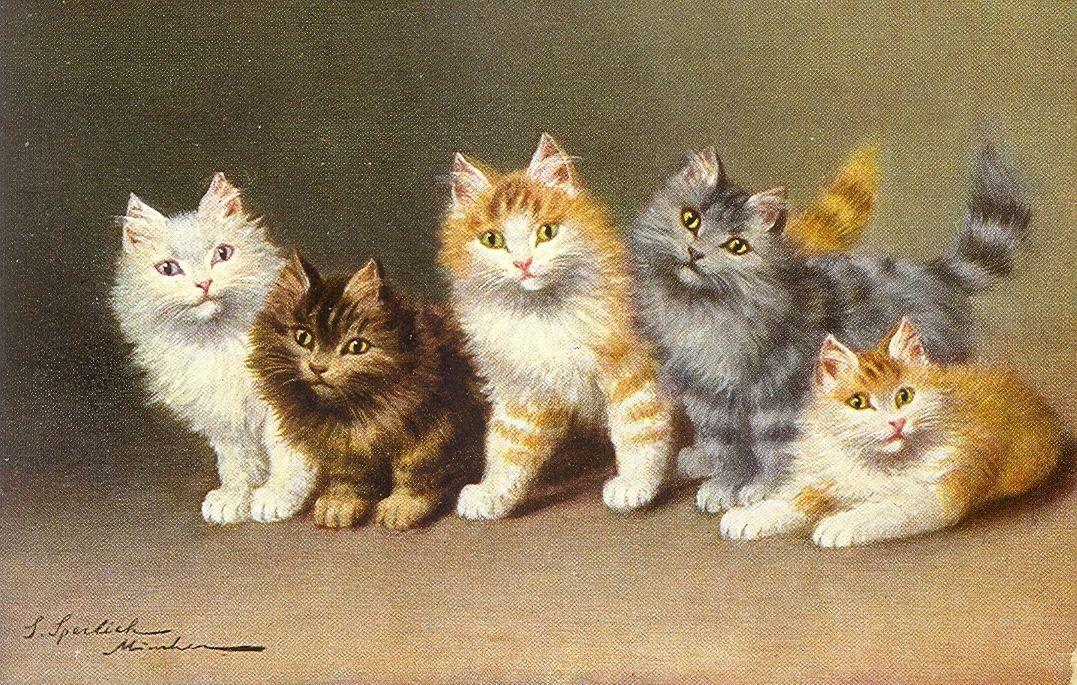 Group of 5 Cats u0026 Kittens Animals