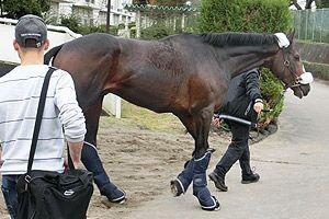 ジャパンカップ gi 外国馬情報 イラプト号 イトウ号 ナイトフラワー号が到着 horses animals