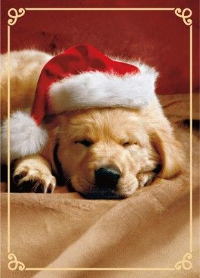 Adorable Avanti Golden Retriever Christmas Cards