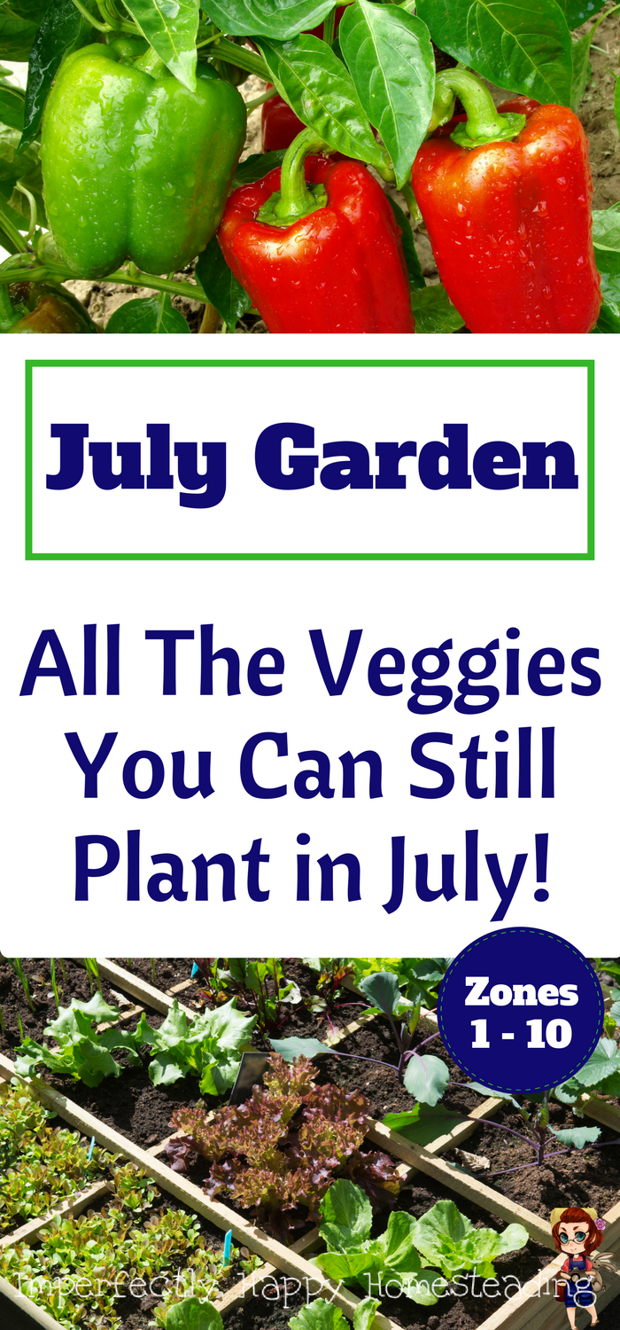 What To Plant In July In Your Vegetable Garden Now Winter Vegetables Gardening Fall Garden Vegetables Growing Vegetables