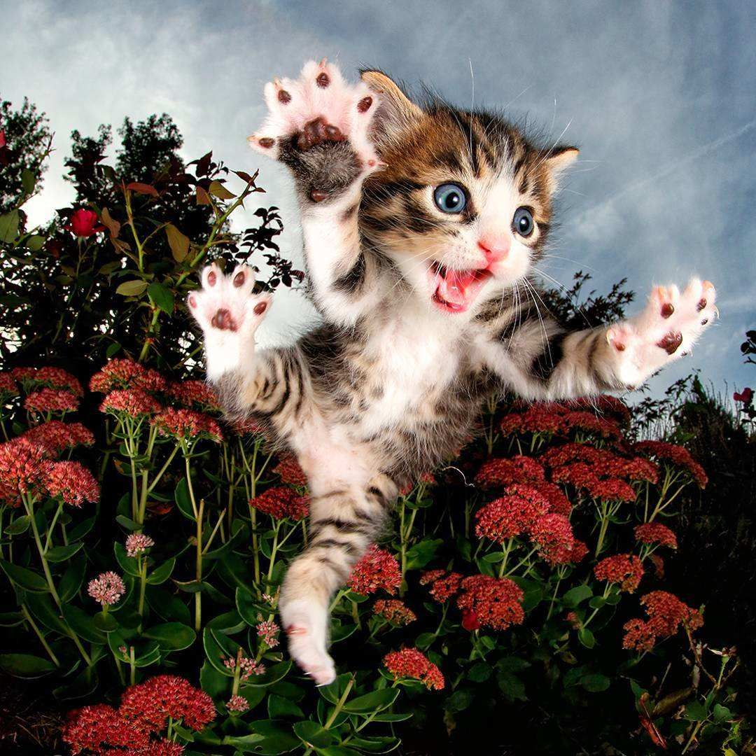 Adorable Cats And Kittens Flying Through The Air By Seth Casteel Kittens Cutest Animal Photography Kittens