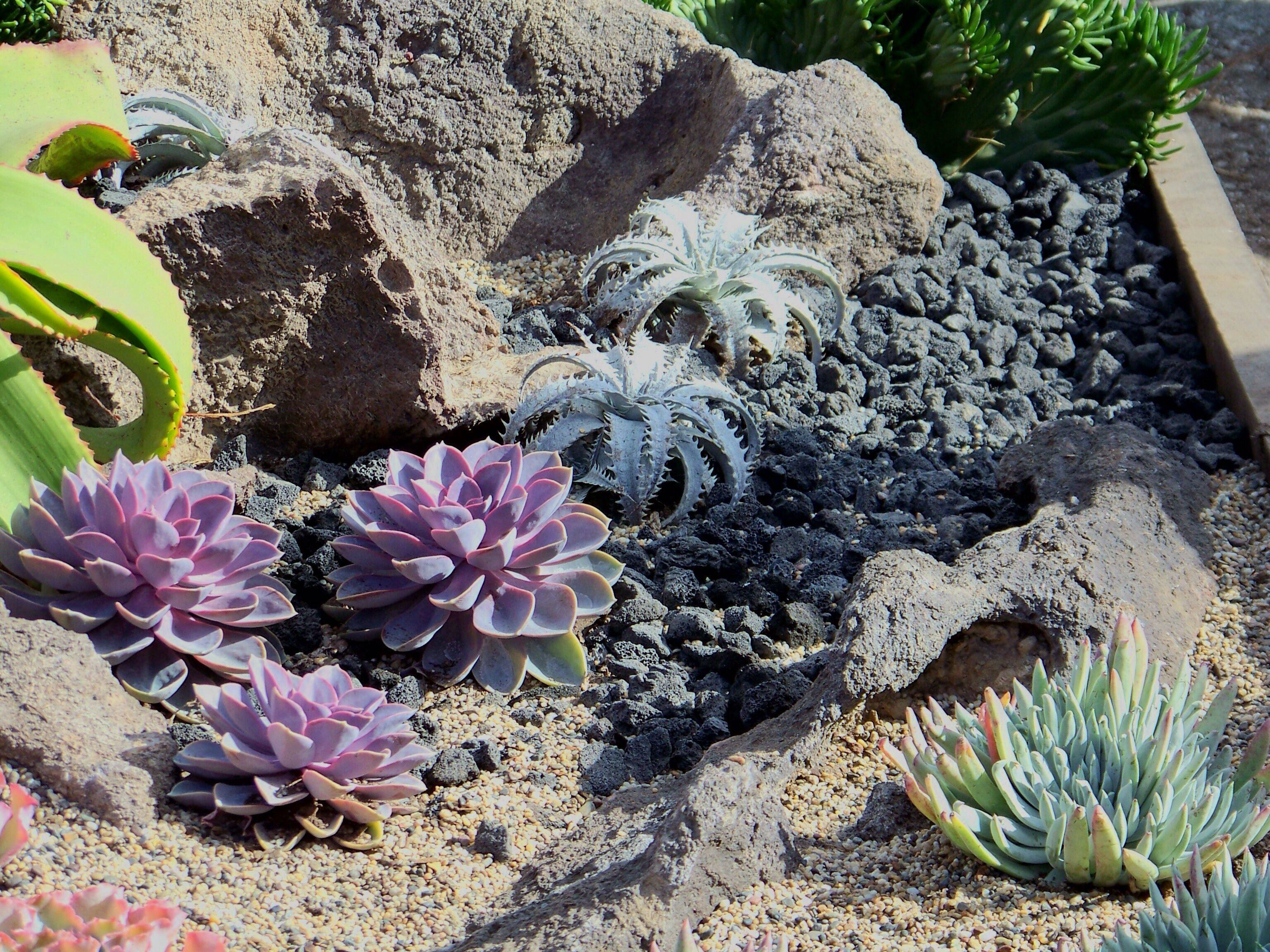 Another View Of Succulents In Under The Sea Garden At Succulent
