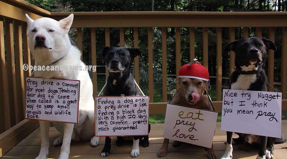 14++ Larimer county animal shelter images