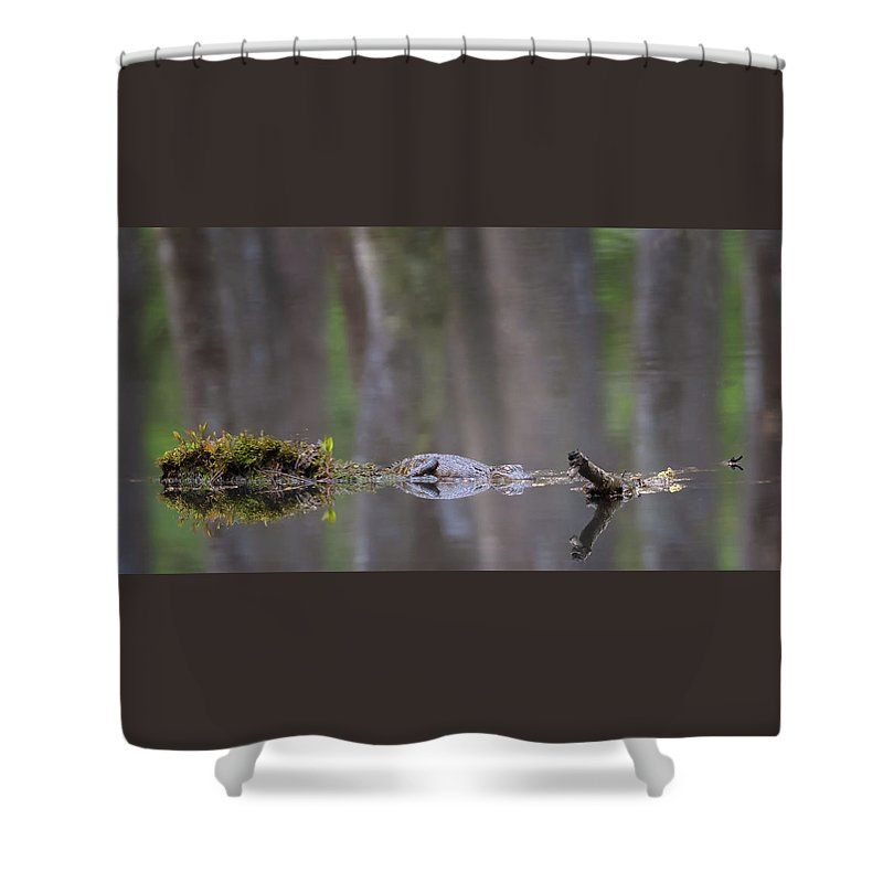 Alligator Shower Curtain Featuring The Photograph Swamp Dreams By