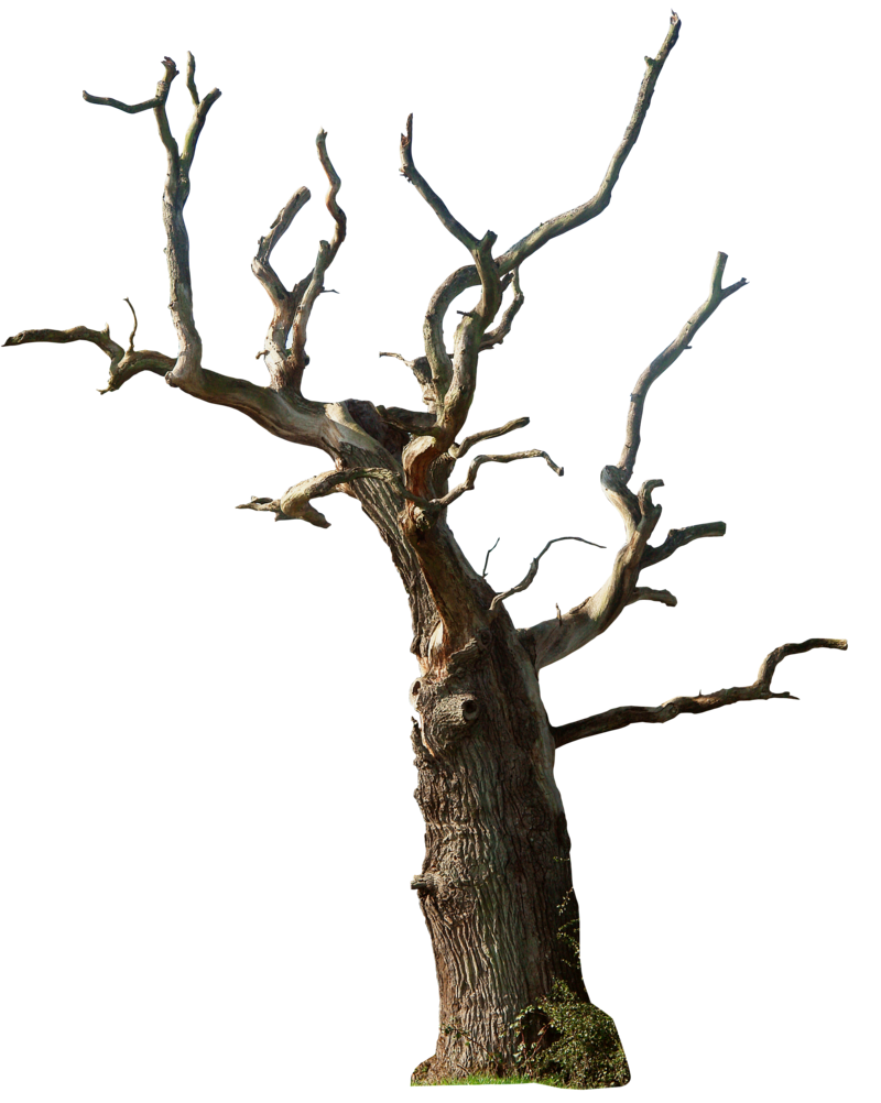 Dead Tree 02 Png By Gd08 On Deviantart Tree Photoshop Dry Tree Tree Textures