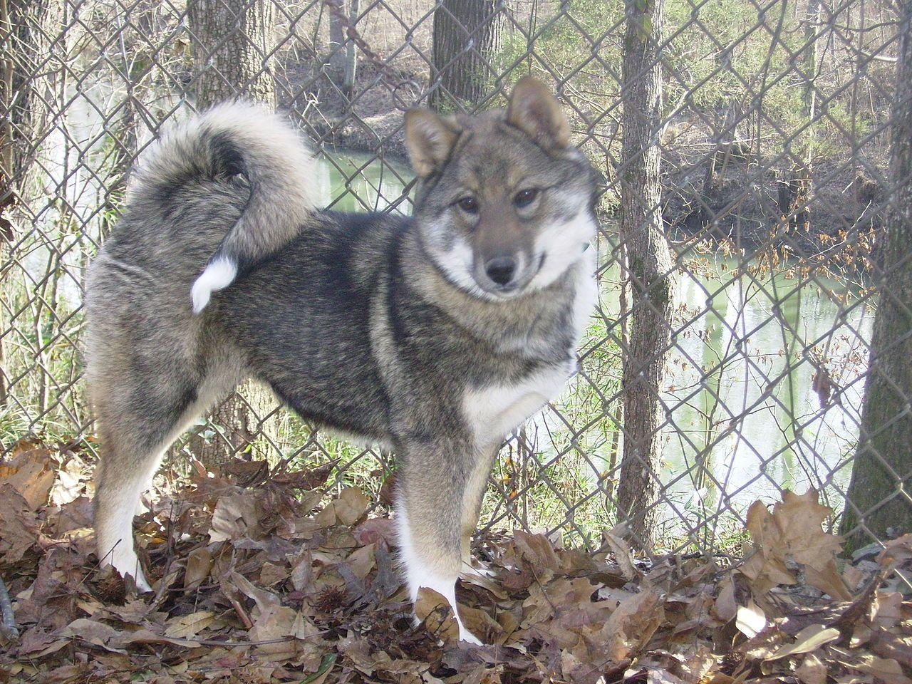 Related image Outdoor dog bed, Dog kennel, Dog kennel