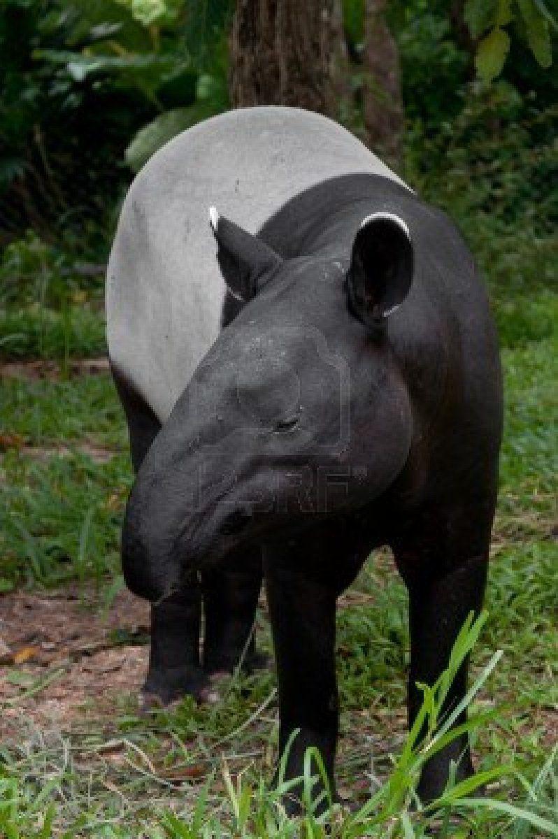 Stock Photo Unique animals, Animals beautiful, Amazon
