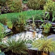 Everything You Need to Know to Build the Perfect Backyard Pond