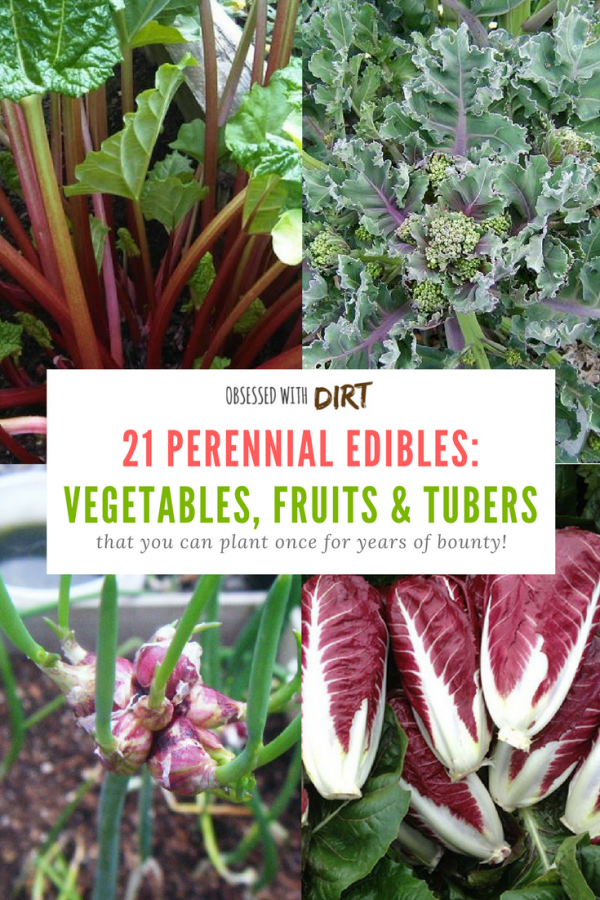 21 Perennial Vegetables You Can Plant Once For Years Of Bounty En