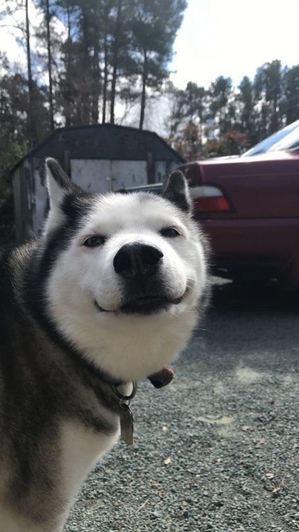 Big Smile From A Big Hearted Dog 13 Years Old Aww Cute