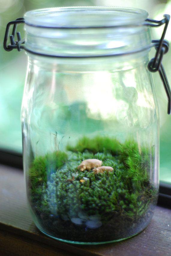 little farm terrariums pinterest terrarium garden. Black Bedroom Furniture Sets. Home Design Ideas