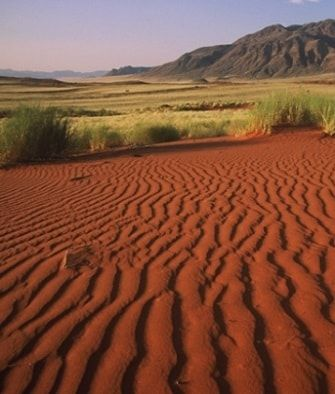 Kalahari Desert Facts | Desert facts, Desert biome ...