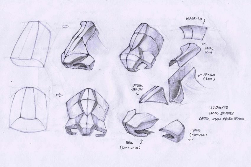 proko nose - Google Search | Nose drawing, Sketch book ...