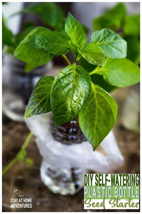 DIY Self Watering Plastic Bottle Seed Starter is part of Seed starter - Those empty plastic bottles can be very handy, huh  Remember the diy hanging soda bottle planter, the diy plastic soda bottle self waterer and the diy plastic