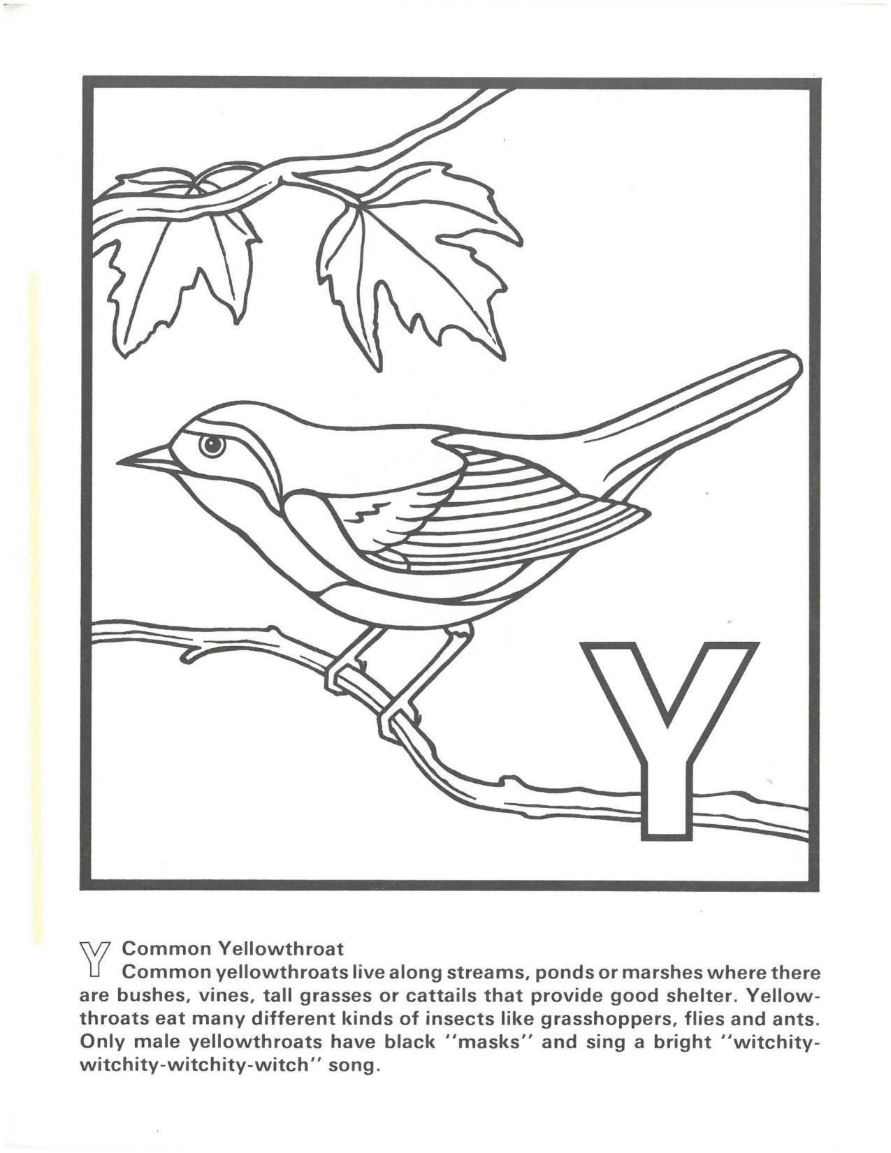 Free Coloring Pages Of Florida Wildlife