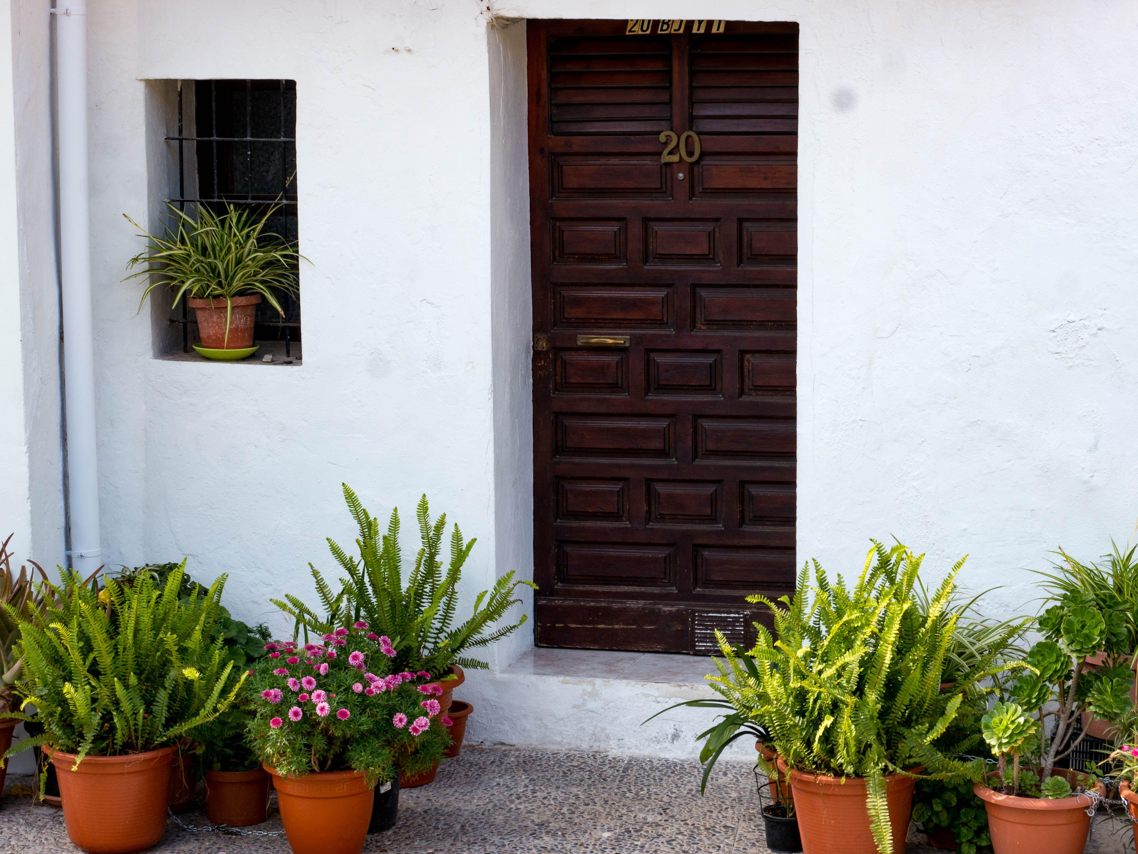 Mein Garten Pflanzen Und Garten Fur Entspannung Und Erholung Pflanzen Garten Pflanzen Mediterraner Garten