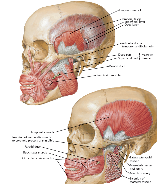 PTERYGOPALATINE FOSSA 1)Overview and Topographic Anatomy GENERAL ...