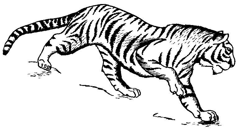 Free Tiger Clipart 1 Page Of Public Domain Clip Art