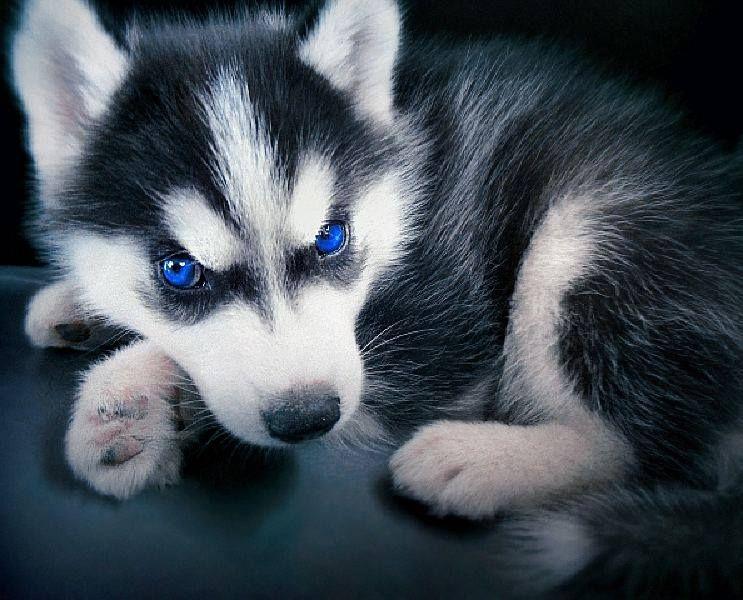 blue eyes <3 <3