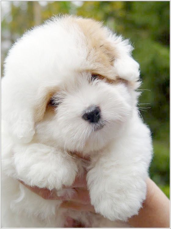 So Fluffy Cute Animals Cute Dogs Pets