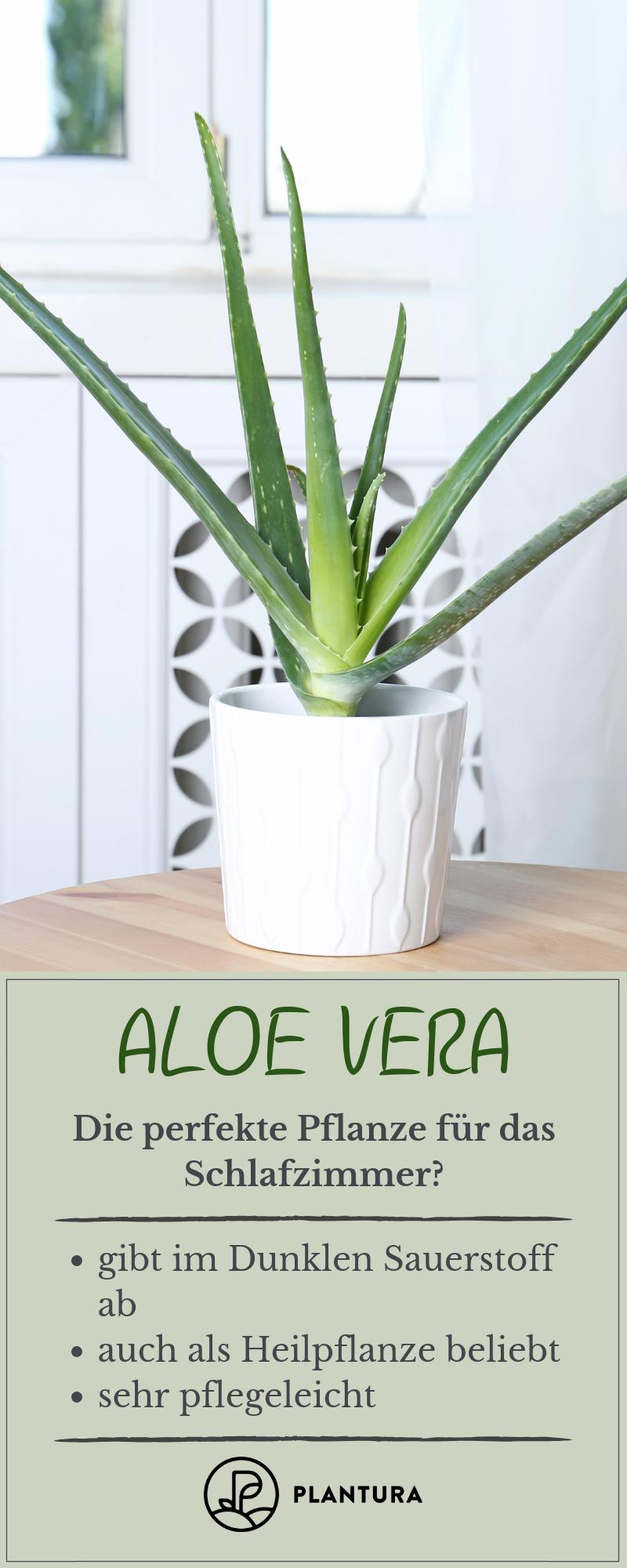 Aloe Vera Die Perfekte Pflanze Fur Das Schlafzimmer Die Aloe Vera Ist Als Heilpflanze Beliebt Aber Nicht Pflanzen Schlafzimmer Pflanzen Blumen Im Blumentopf
