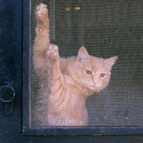 Keeping Cats From Scratching Screen Doors Screen Door Window Screens Cats