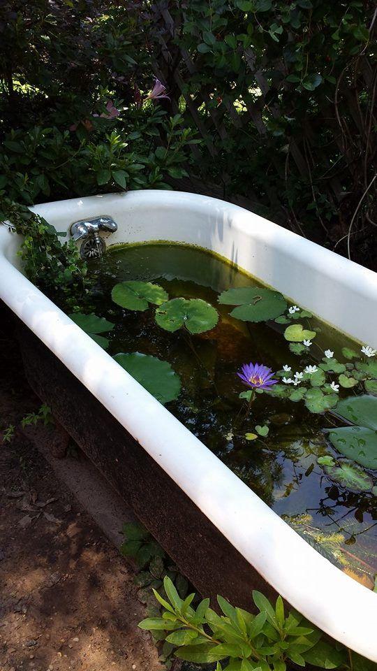 Clawfoot Tub Turned Garden Pond!