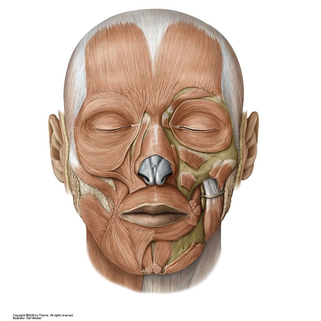Biology Pictures Facial Muscles