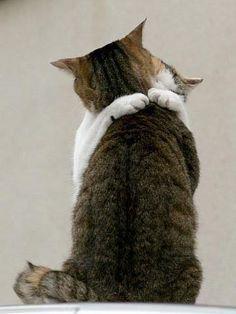 Chat Qui Font L Amour : amour, Épinglé, Tenderness
