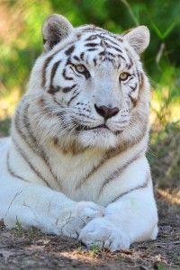 Public Tours Animals Beautiful Wild Cats Wildlife Sanctuary