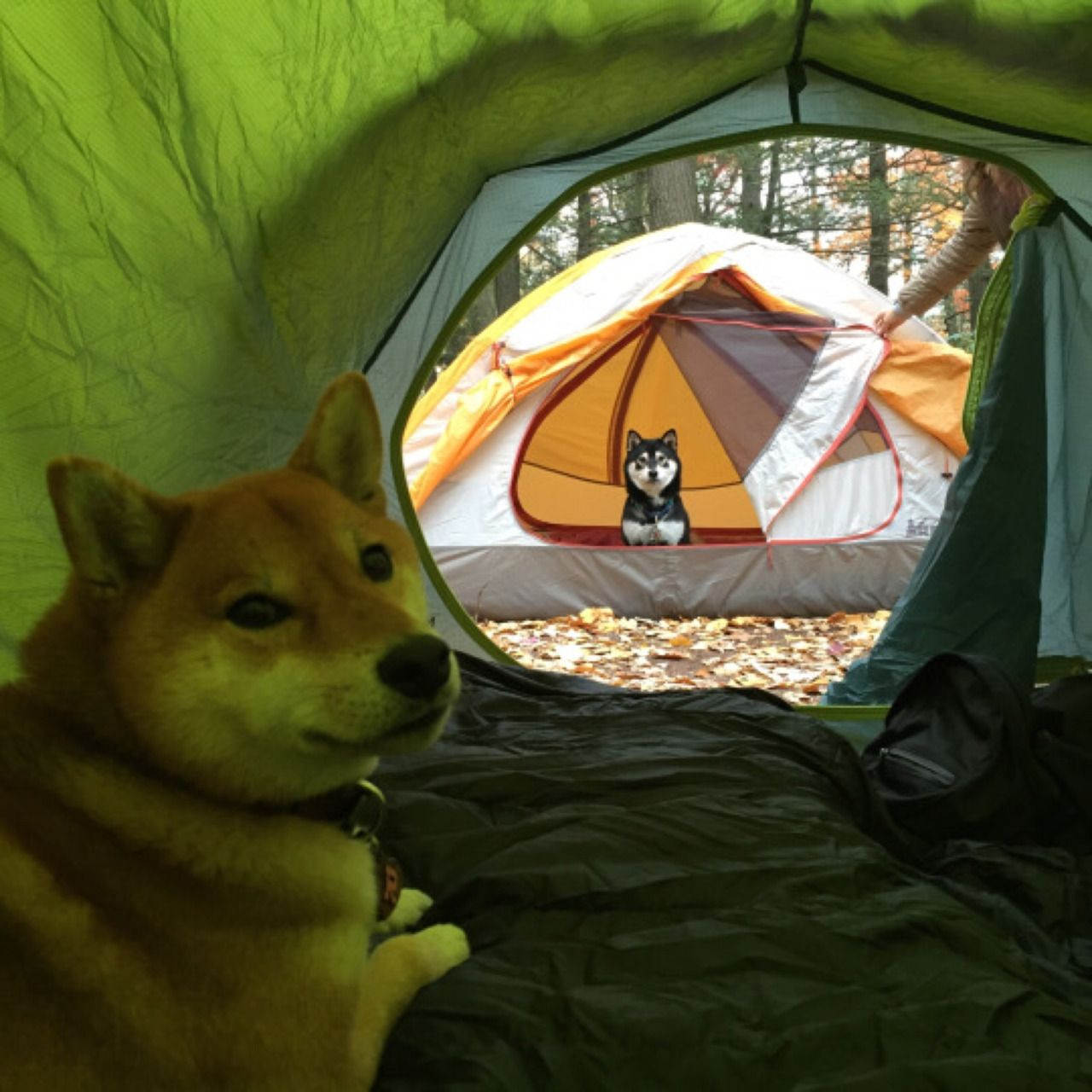 Dogs camping, and those are not pup tents  | Animals | Funny