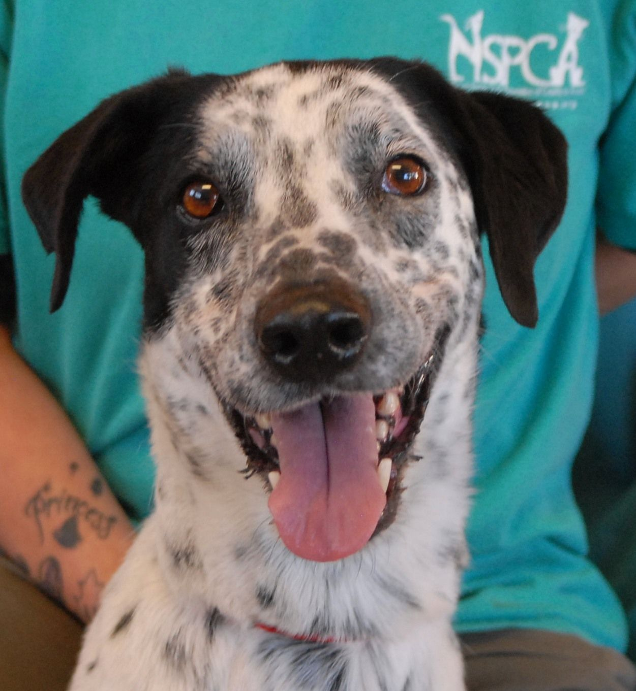 Reno A Pointer X Rescued From Near Starvation The Dangers Are Behind Me And I See Beautiful Days Ahead Animal Shelter Quotes Dog Crate Crate Training Puppy