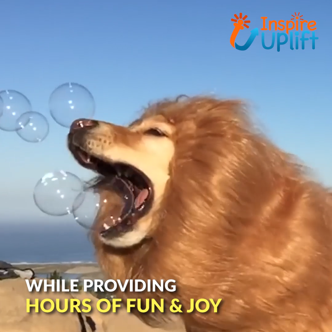 Lion Mane Wig for Dogs �