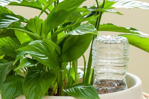 How to Make Your Own Self-watering Plant Spikes #selfwatering