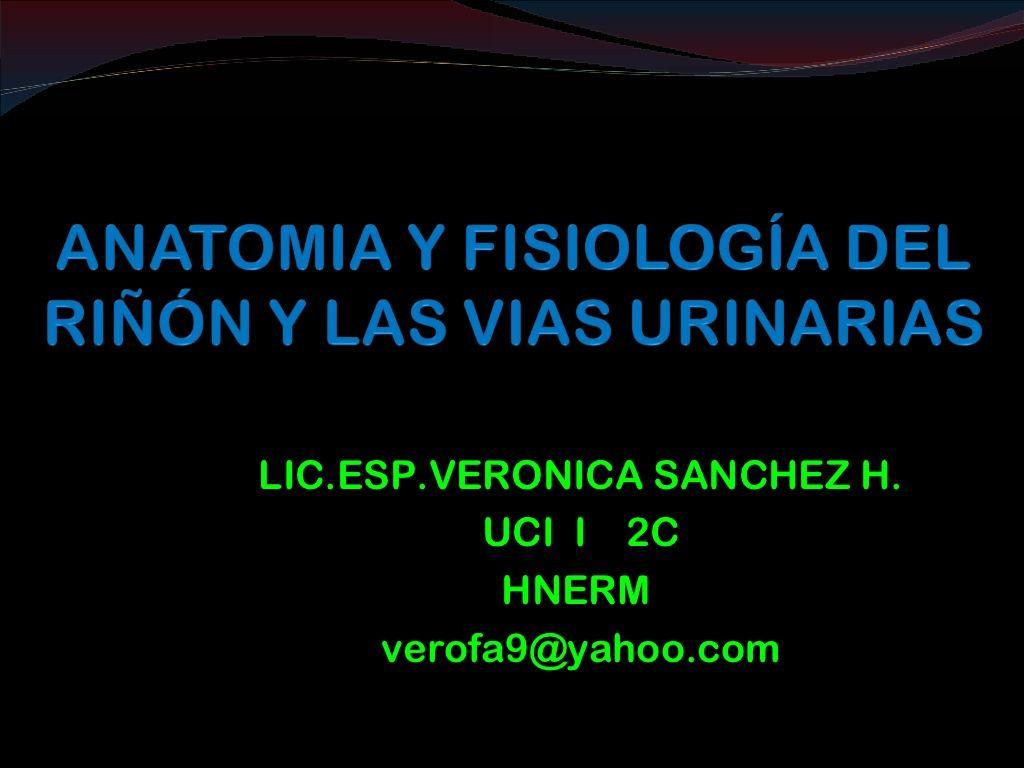 Anatomía y fisiología del riñón y las vías urinarias by ...