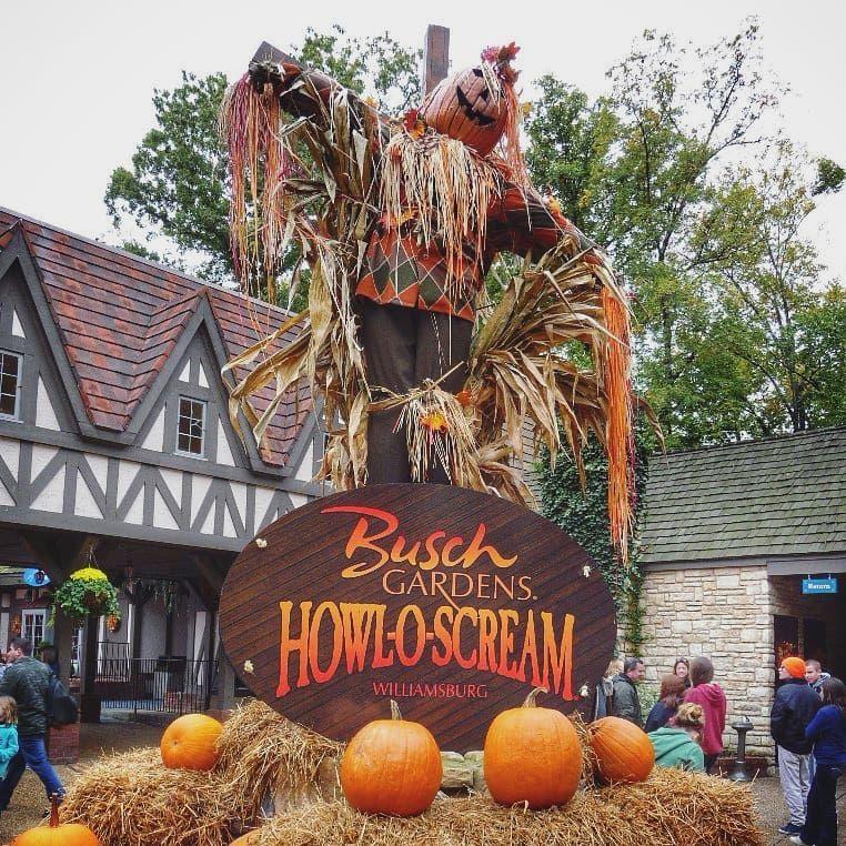 e7baf8b1adfd700ae5f13706fe17d788 - How Busy Is Busch Gardens On Thanksgiving