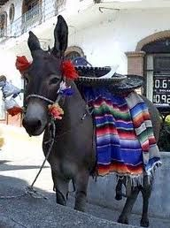 mexican donkey - Google Search