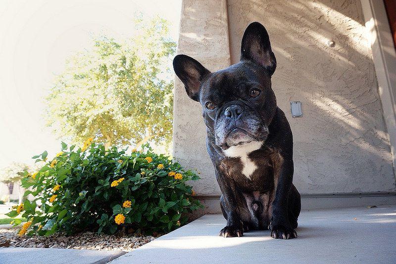 Doorstop French Bulldog Door Stop Best Dogs