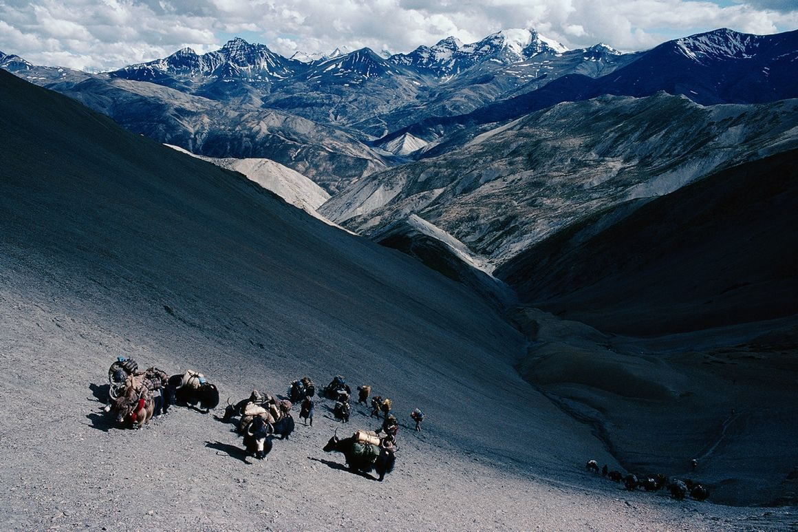Fotografie Caravane De Yaks De Retour Au Pays Eric Valli Yellowkorner Photo Natural Landmarks Weird Pictures