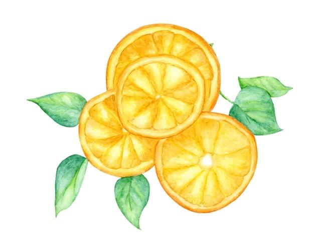 Slice Of Orange Fruit And Green Leaves Orange Fruit Fruit Sketch Fruit Illustration