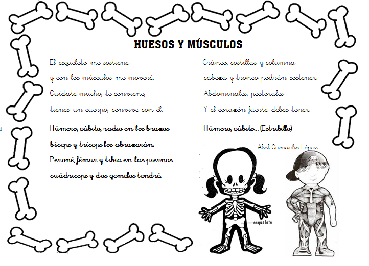 dibujos de los huesos del cuerpo humano para imprimir